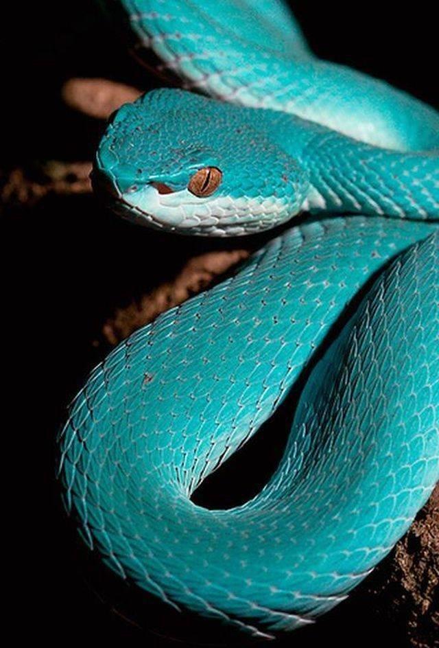 самые самые красивые змеи планеты фото показывает малышам, как