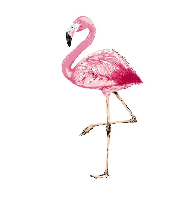 Картинки розовый фламинго рисунок
