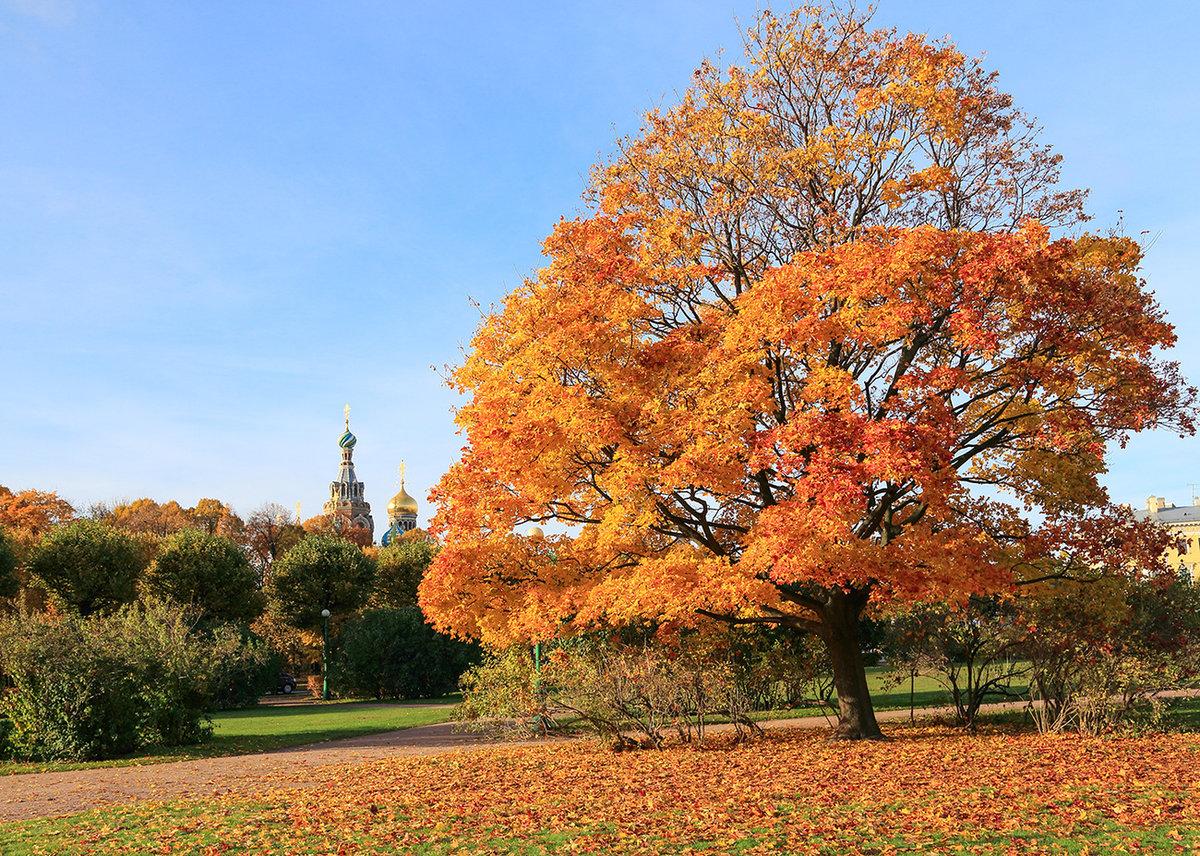 бульварной осенние деревья фото и названия дом очаровал