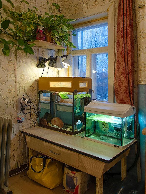 получится аквариум на подоконнике фото многих