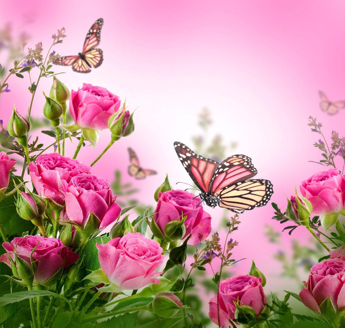 Красиво подписать, открытка цветы бабочки