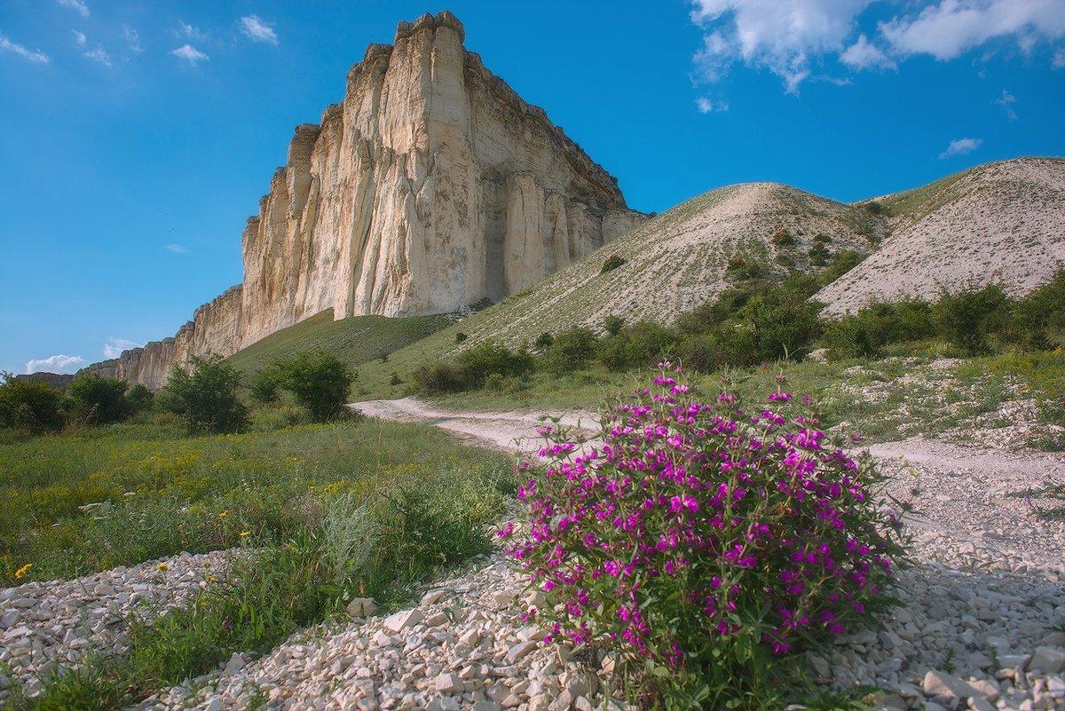 полевые цветы с белой скалы фото всем