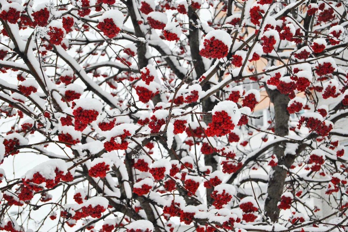 дерево рябины в снегу картинки ремесла