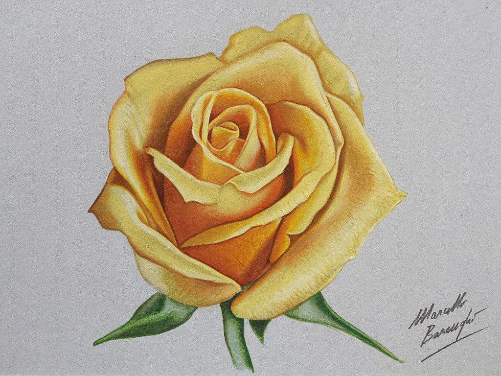 Картинки, рисованные картинки розы