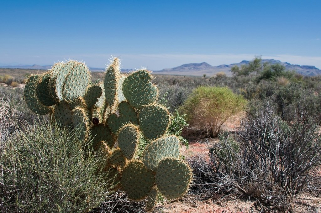 sahara desert plants - 1024×680