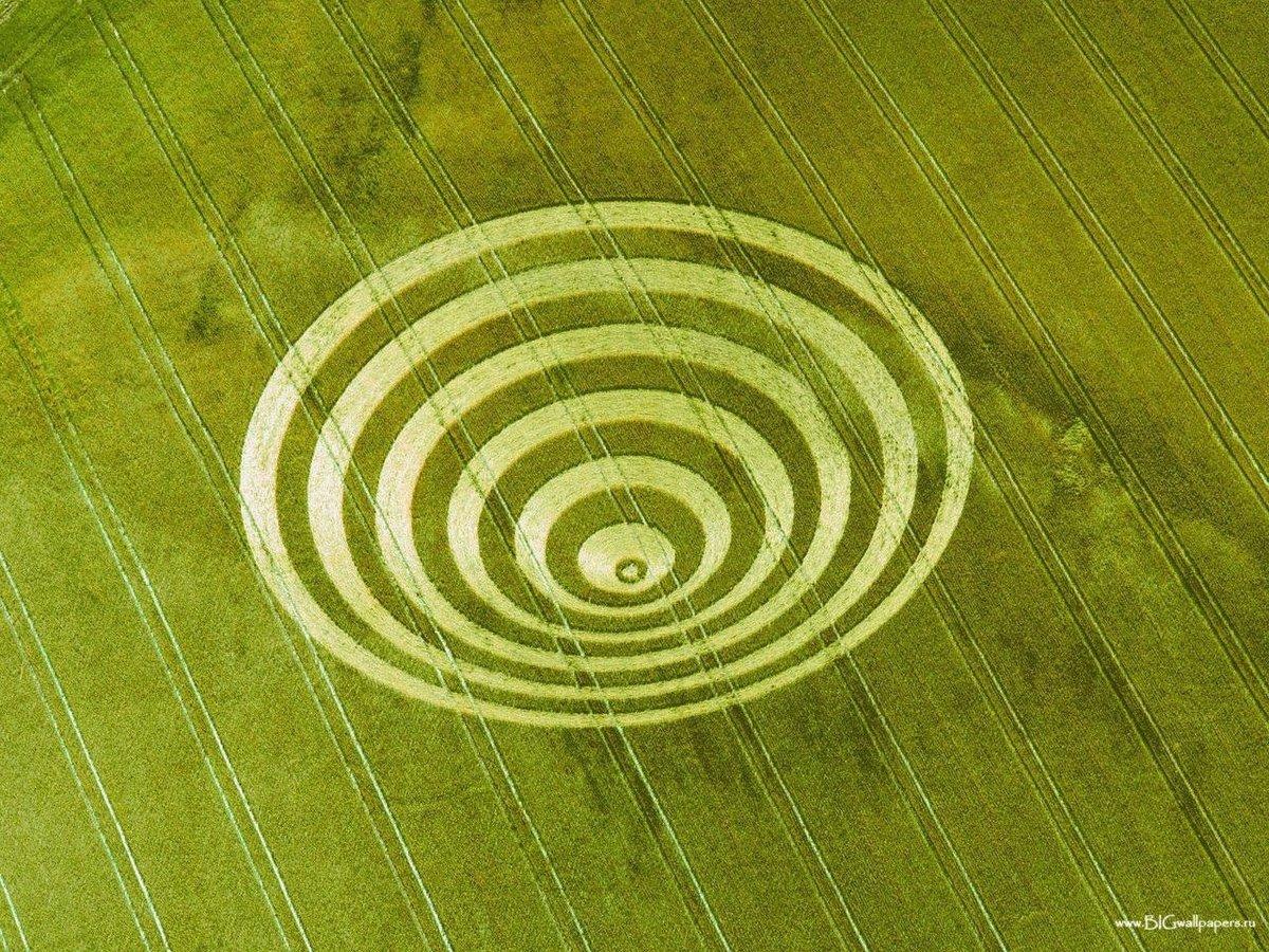 выигранные золотой круги на полях картинки обои около силуэт верховой