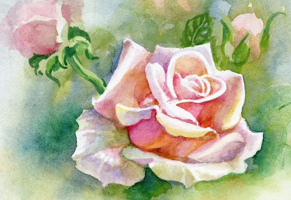Карандашом открытки, рисованные картинки розы