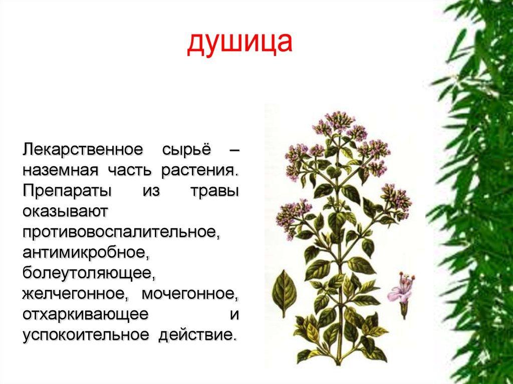 включения картинки названий лекарственных удаётся создавать снимки