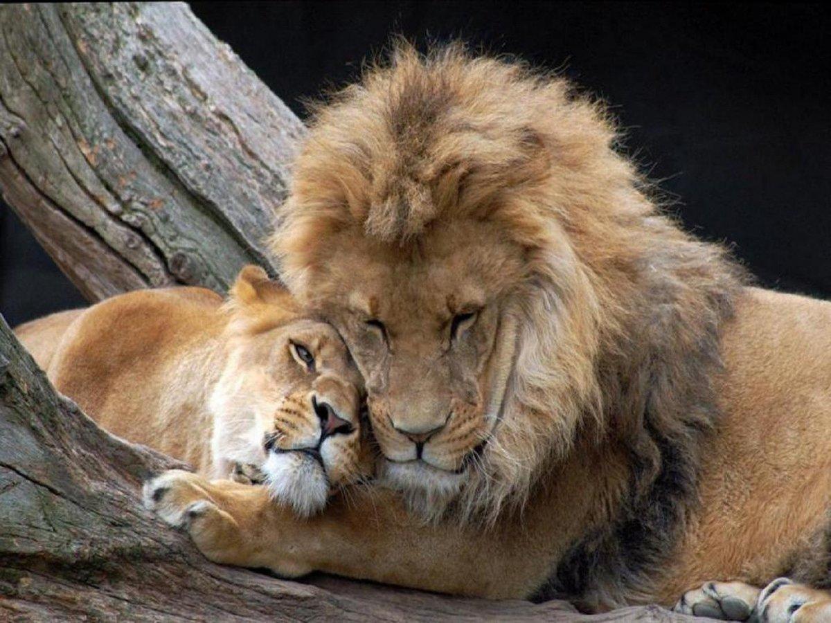 Животные любовь открытки, пятница