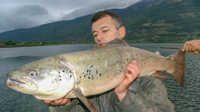 Fishhungry (голодная рыба) активатор клеваhttps://bit.ly ...
