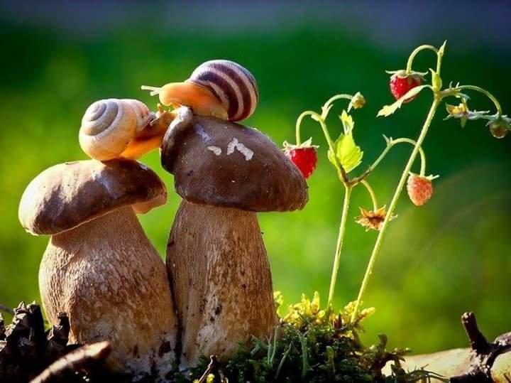 Облюбовали боровички