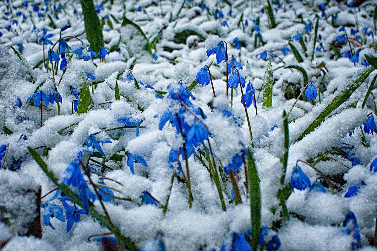 весна фото снег радостью