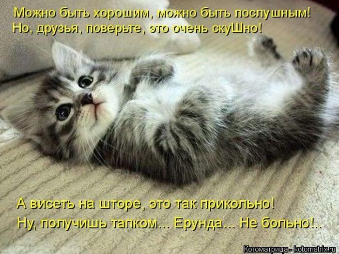 Рамки мая, картинки с котятами с прикольными надписями