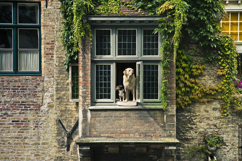 Брюгге. Молли и Фидель #архитектура #бельгия #брюгге #город #друзья #животные #собаки #средневековье