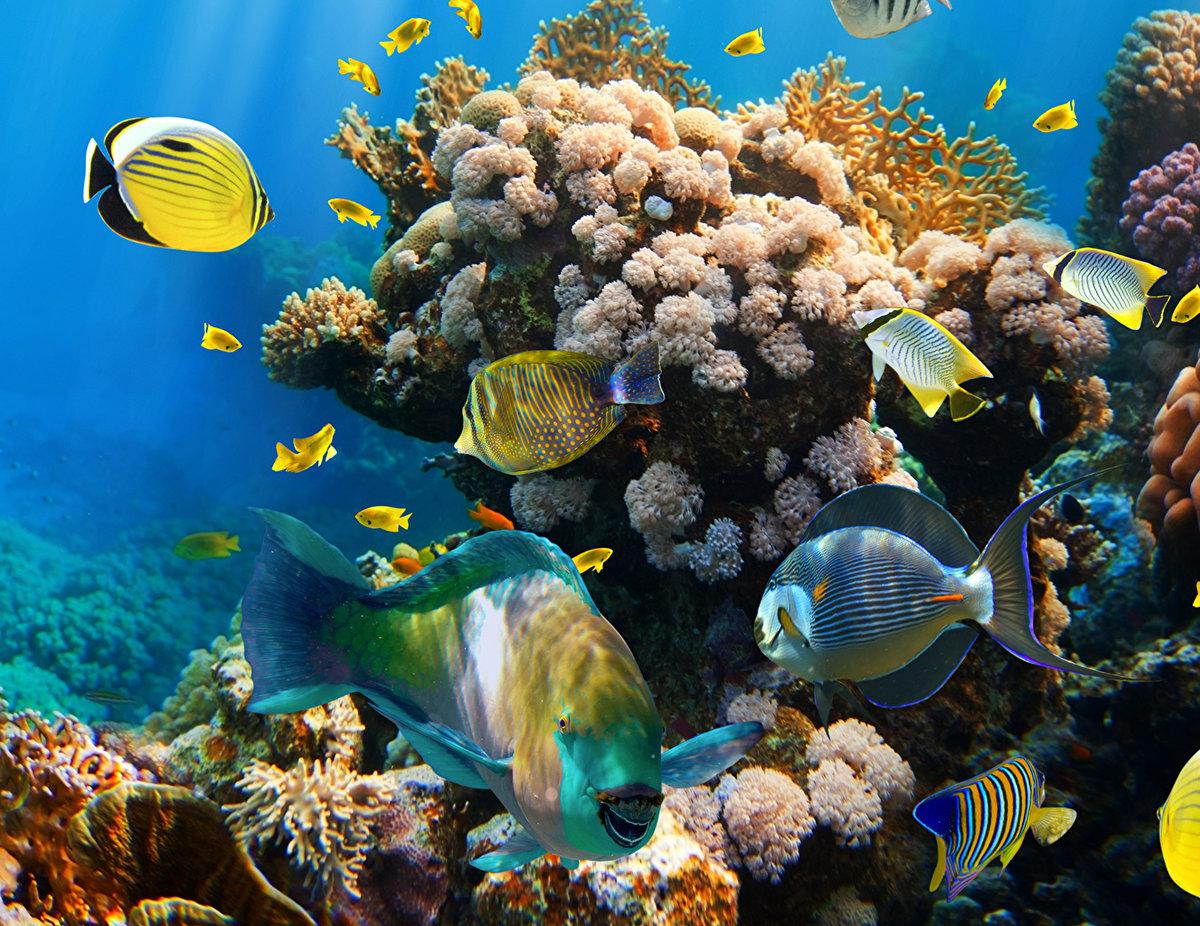 картинки с рыбами в хорошем качестве добавите фото