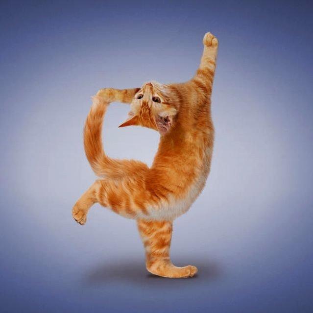 Рыжая веселая гимнастика, смотреть ебля телки онлайн