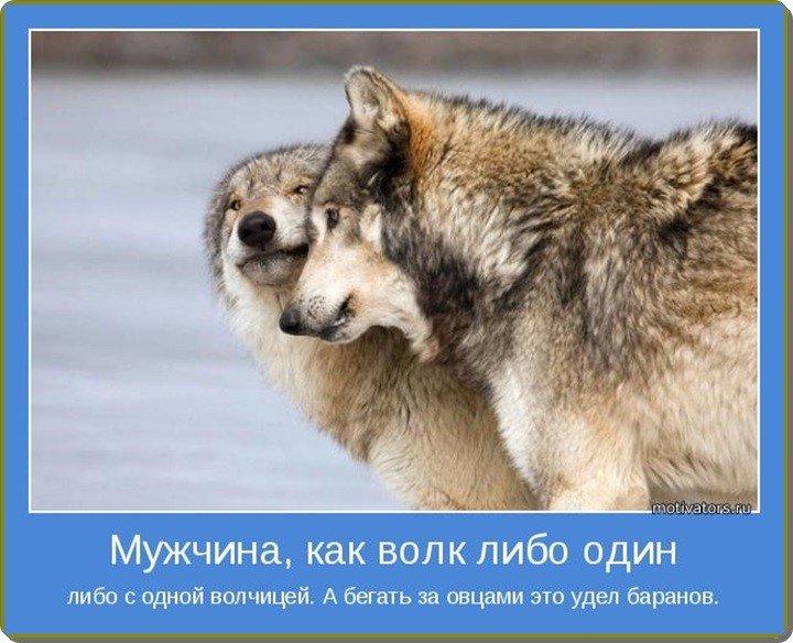 Волк защищает волчицу картинки с надписью