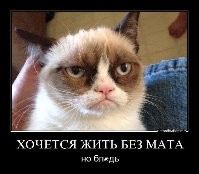 коты с матом мемы уже было