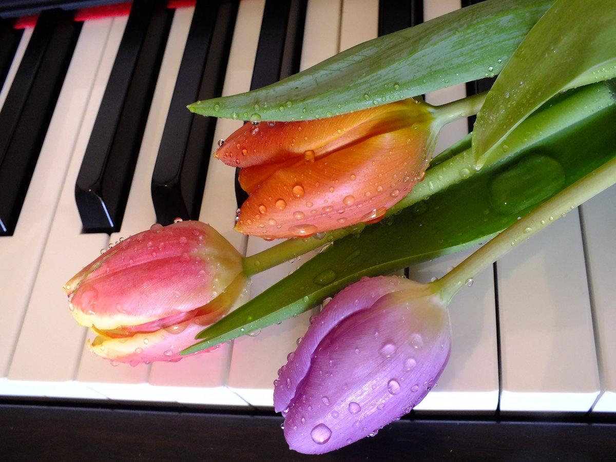 Открытки мелодия весны, ящерица