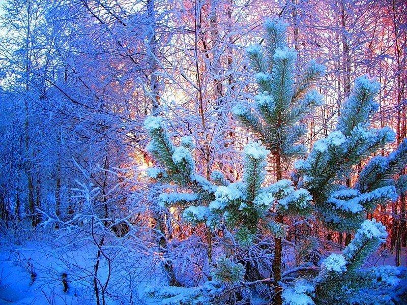 картинки на аву зимние красивые природа смелым