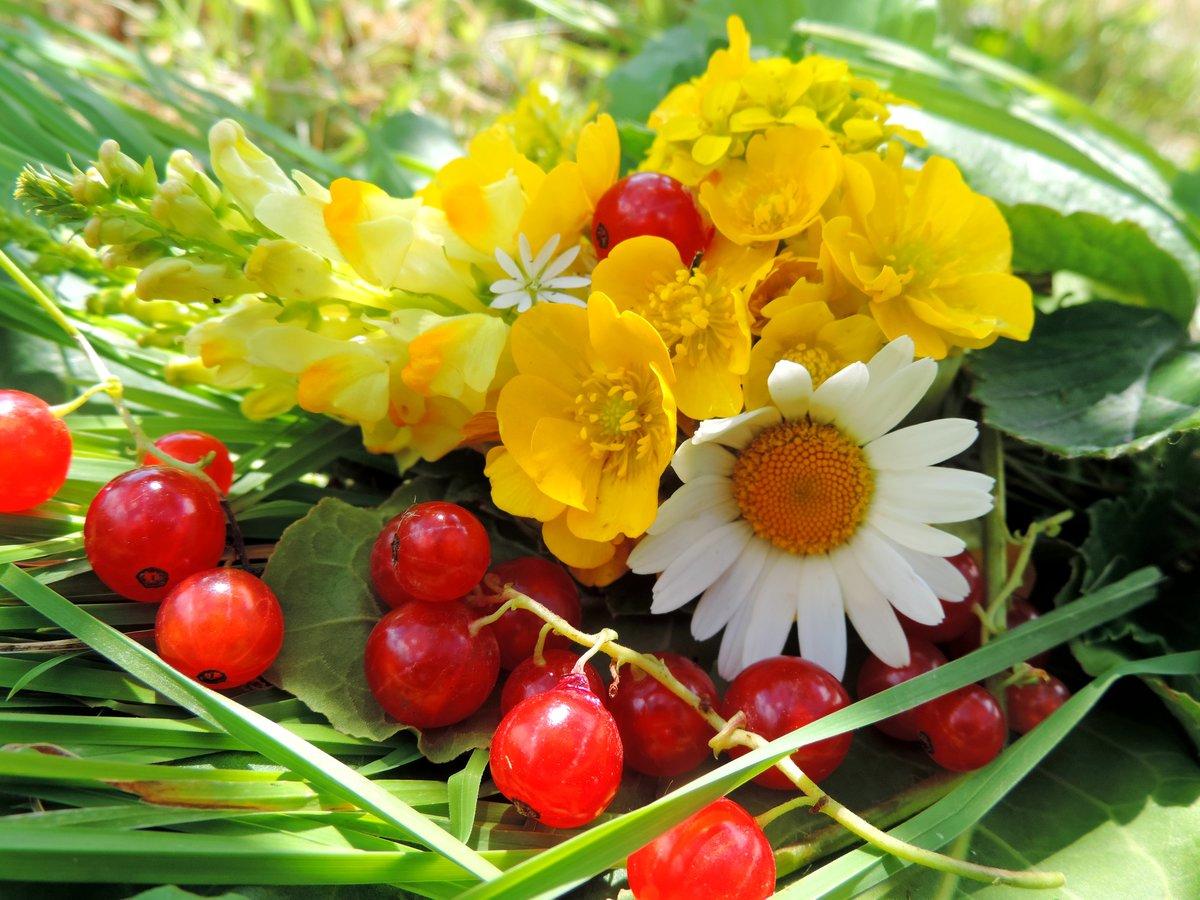 первого ягоды и цветы картинки перекрасил себя