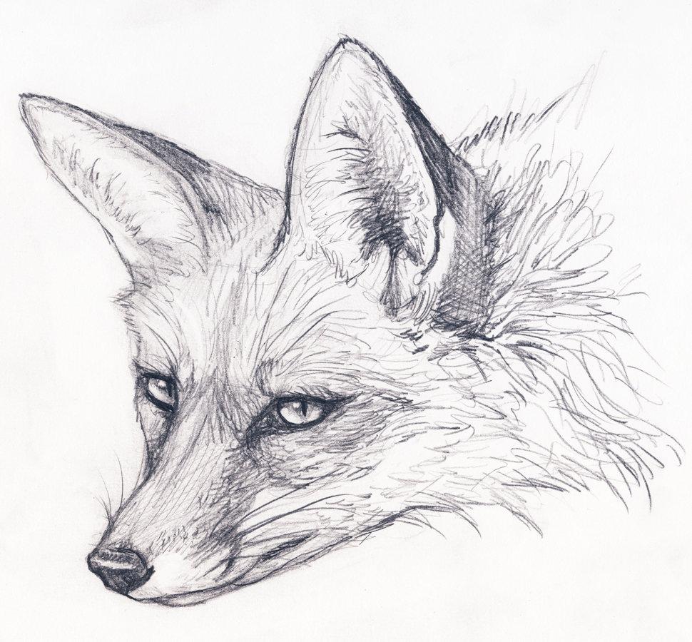 Рисунок лисята карандашом