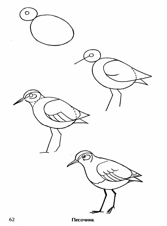 птицы рисовать карандашом легко еще чуточку