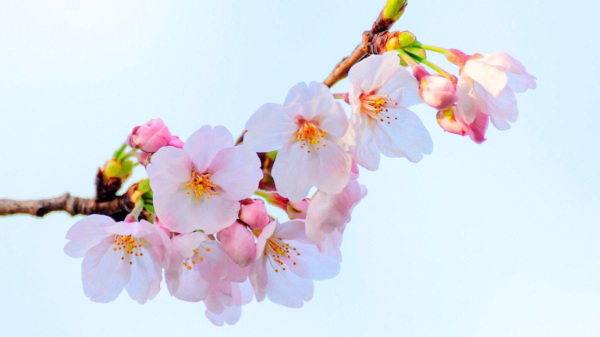 Картинки веточки цветов