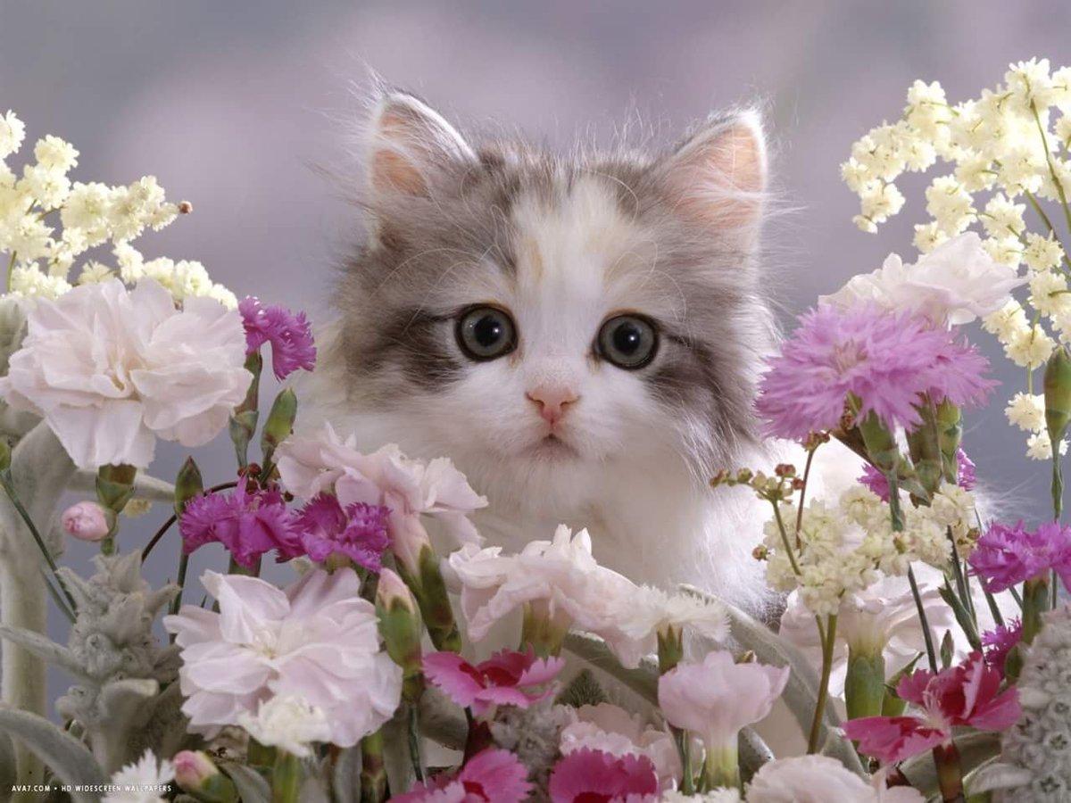 Телефон днем, открытки с котенком и цветами