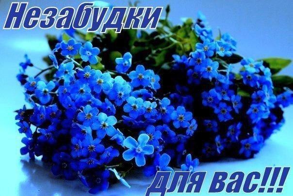 Спокойной ночи, анимация незабудки цветы