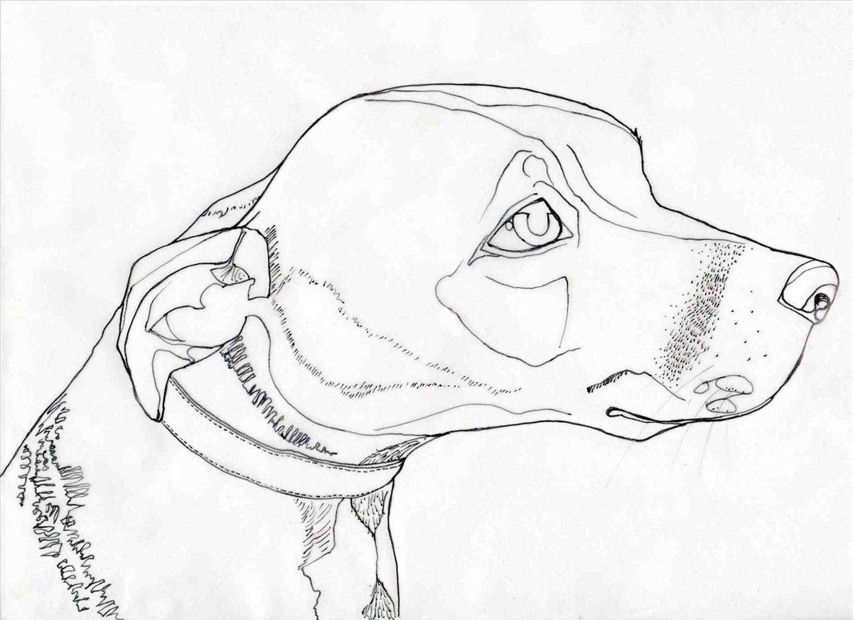 Морда собаки карандашом картинки