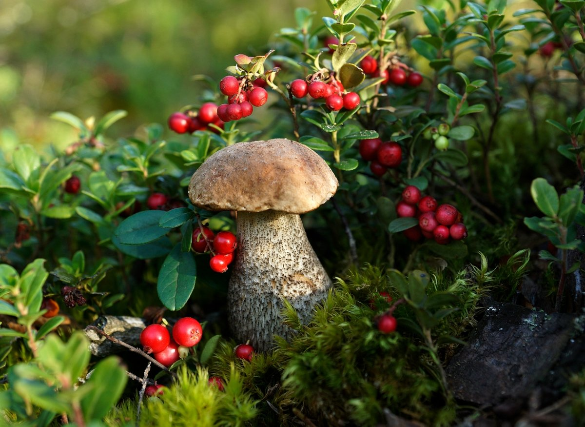 джи картинка осеннего леса с грибами и ягодами это одна