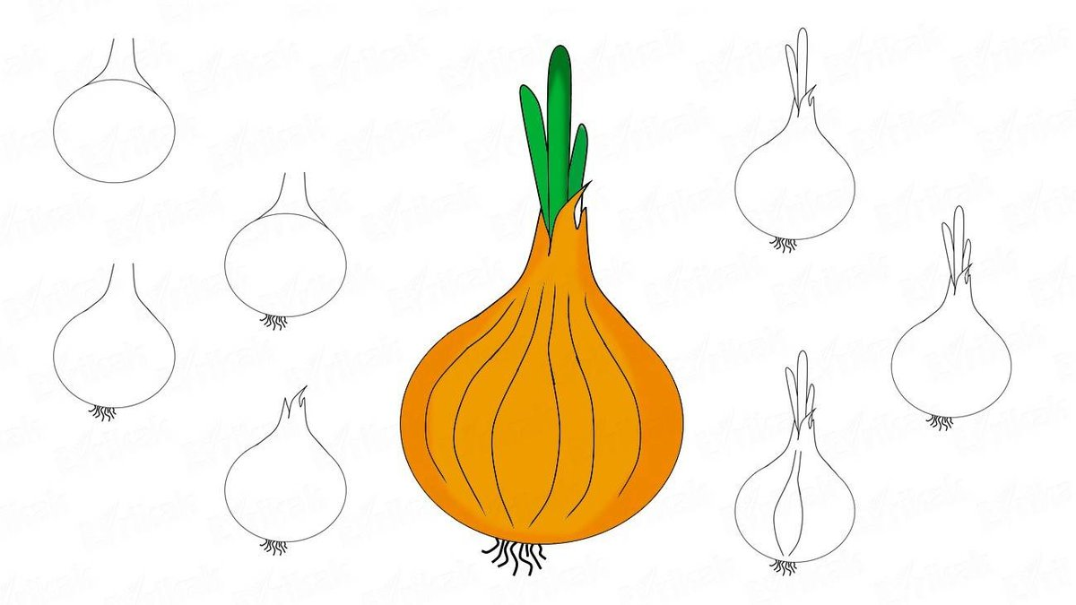 Картинки нарисованные для детей луковица