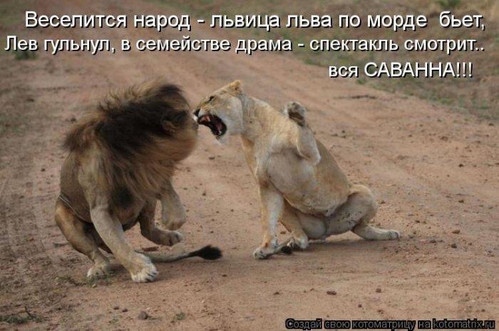 Днем медицинского, картинки львов с надписями смешные