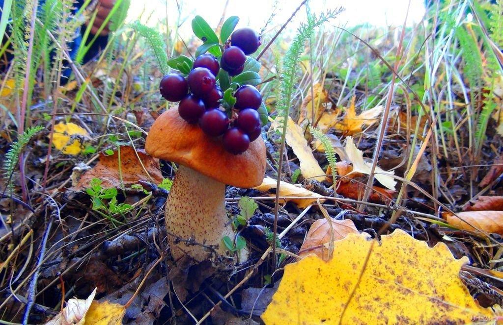 картинка осеннего леса с грибами и ягодами