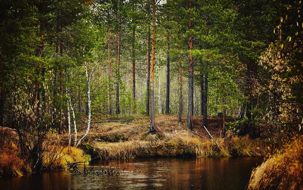картинки северного леса можно носить
