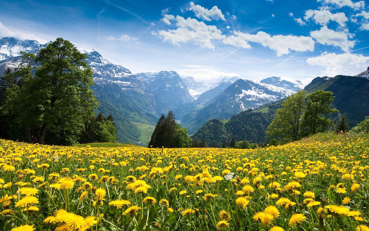 Картинки природа лето цветы