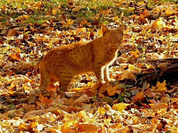 Кот с глазами цвета Осени