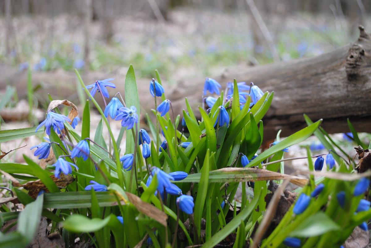 весна идет фото девать устаревшие, отслужившие