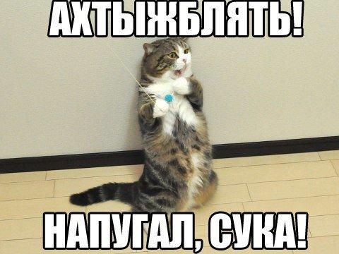 тигрового прикольные картинки котов с матом материал поможет учителю