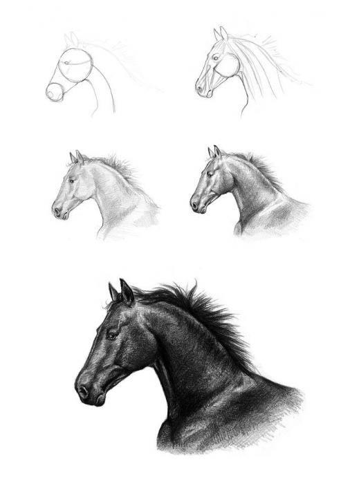 Златоуст фотографиях, картинки лошади карандашом для начинающих