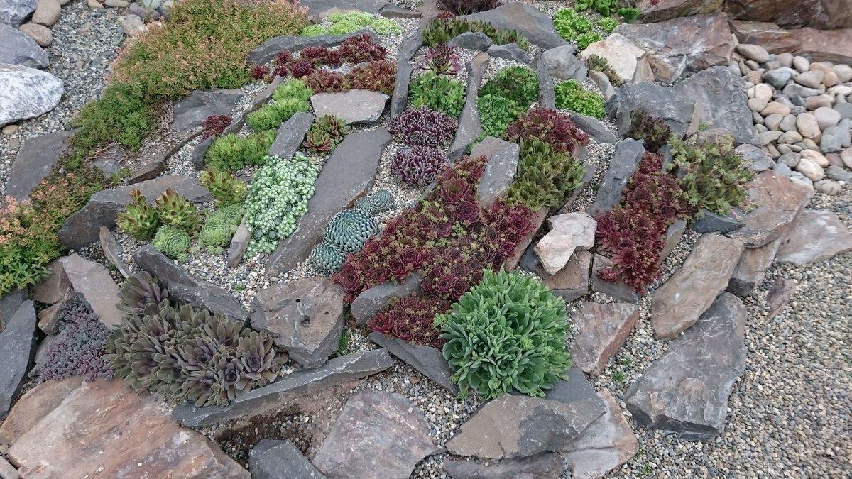 Где можно купить цветы для альпийской горки, рассаду цветов