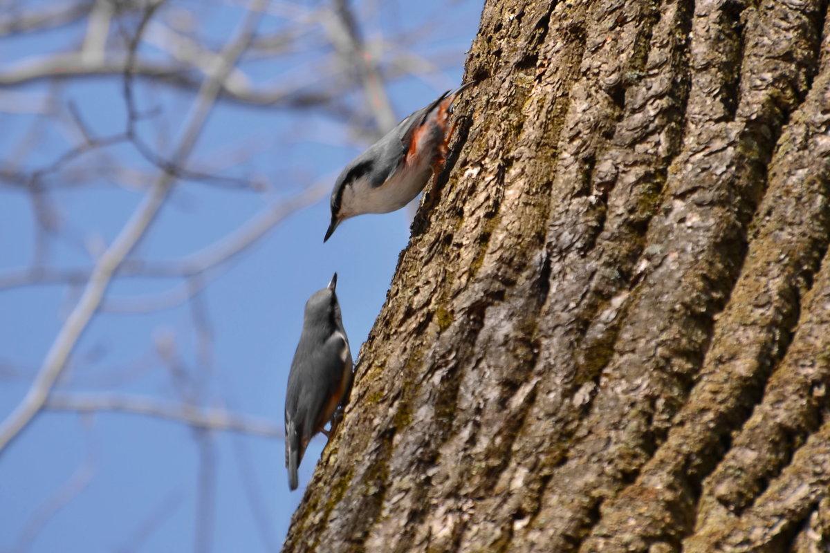 того, лесные птицы чувашии фото с названиями отмечают