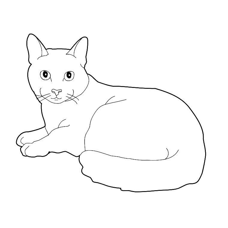 Рисунки животных домашних карандашом