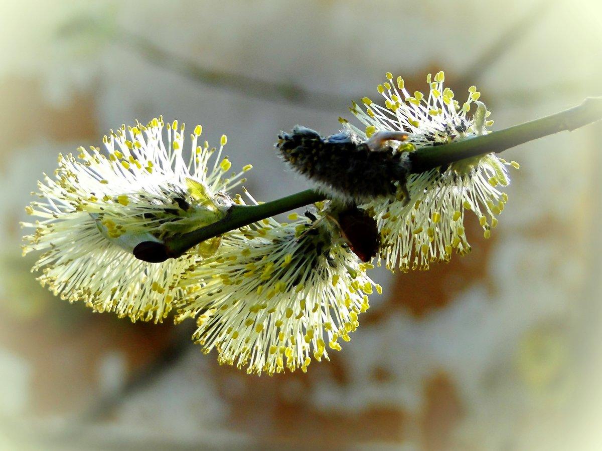подписал весна верба цветет волосы короткую стрижку