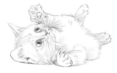 рисунок животное скачать карту дом для майнкрафт 1.7.10 для выживания