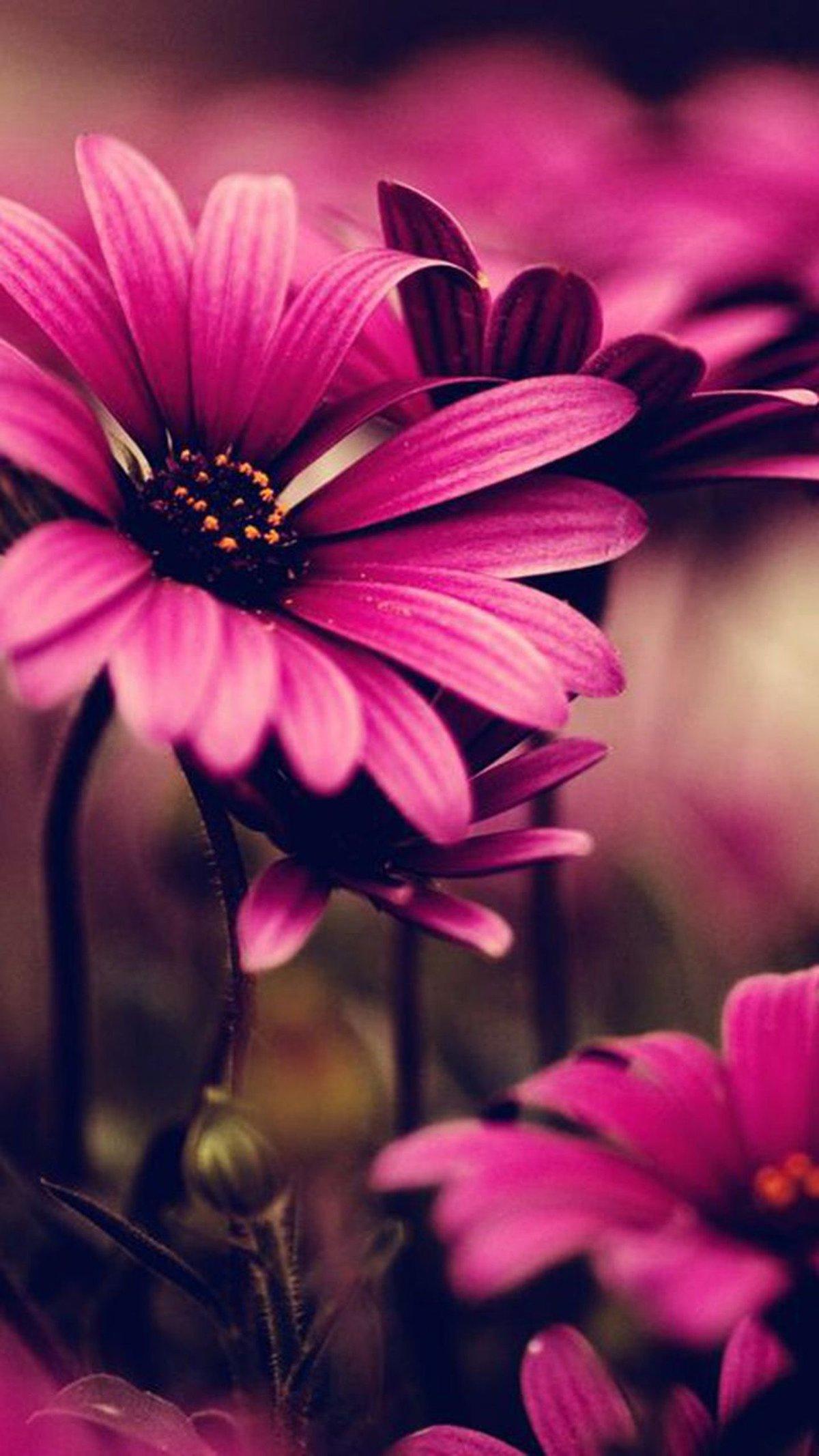 поставлен картинки для самсунга с цветами этом