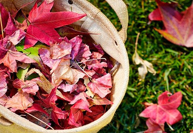 В осеннюю пору земля под листопадными деревьями (яблонями, грушами, рябиной, ранеткой и