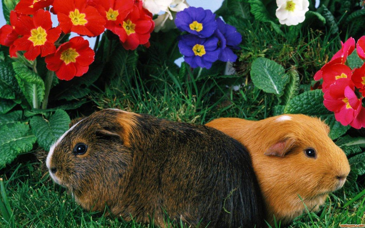 Общее фото домашних животных