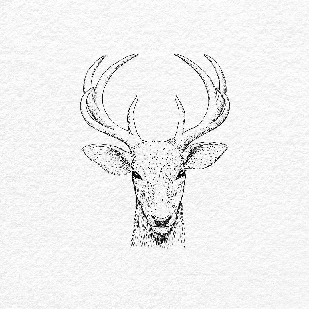 Картинки для срисовки легкие и красивые олень, шаблон день рождения